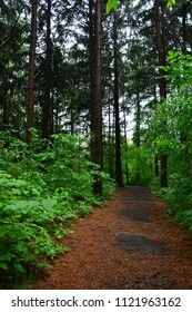 Beautiful Wisconsin walkway through a wooded pine forest.