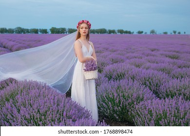 Beautiful woman with a basket of lavender in a lavender field