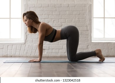 Beautiful woman in grey sportswear, pants and bra practicing yoga, standing in asana paired with Cat Pose on the exhale, Cow pose, Bitilasana exercise, girl working out at home or in yoga studio