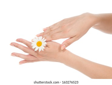 Beautiful woman hands french manicure with camomile daisy flower on  isolated on a white background
