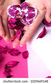 Beautiful woman hands holding an orchid flower, on pink background; spa and manicure concept