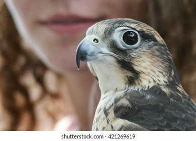 beautiful woman with hawk