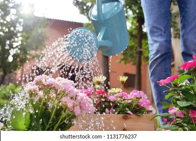A beautiful woman in her garden, water with a blue watering can of colored flowers to give color and decorate your garden. Concept of: gardening, spring, bio.