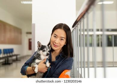 Beautiful woman holding Chihuahua dog at vet hospital.