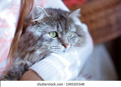 Bilder Stockfotos Und Vektorgrafiken Guten Morgen Katze
