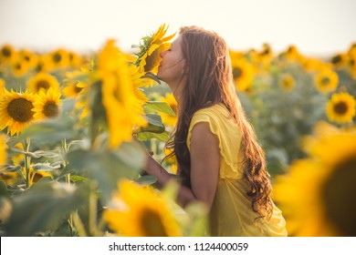 Beautiful woman with long hair in a field of sunflowers sniff flower in the summer in the sunlight