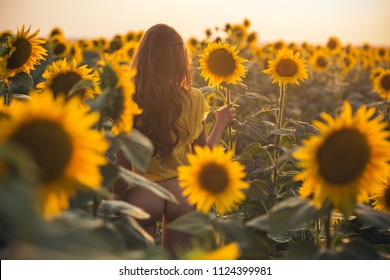 Beautiful woman with long hair sexy back in a field of sunflowers in the summer in the sunlight