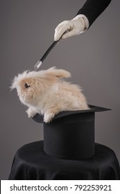 Beautiful woman magician with rabbit in hat. Close up