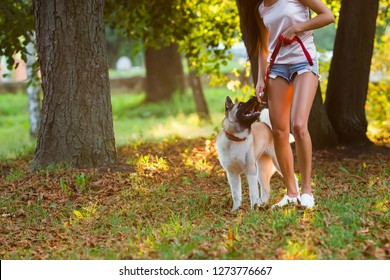 Beautiful woman playing with a dog walking in the park.