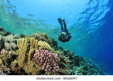 Beautiful Woman Snorkeler explores a Coral Reef in the Red Sea