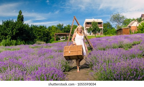 Beautiful woman walking in lavender field with big wicker basket for picnic
