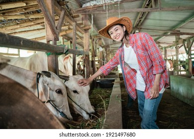 a beautiful woman wearing a hat smiling at the camera while taking care of a feeding cow with a cow barn background