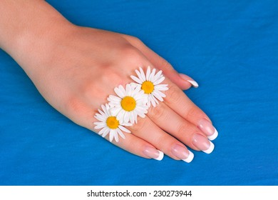 Beautiful woman's hand with perfect french manicure decorated with chamomile flowers