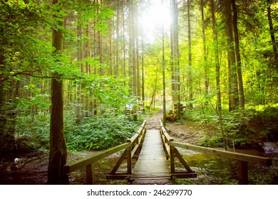 Beautiful wood bridge in the forest in sunlight
