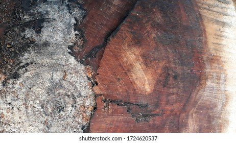 Beautiful wood cut nature background for your decoration - Shutterstock ID 1724620537