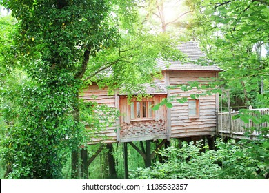 beautiful wood house on top the tree