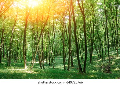 Beautiful wood at the sunset. Environment protection.
