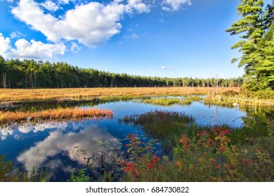 A beautiful wooded marsh in Pawtuckaway State Park with cloud reflections and autumn colors