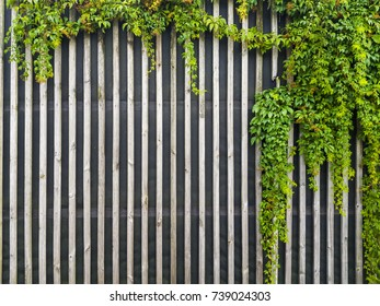 beautiful wooden background with a curly plant