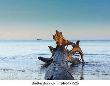 Beautiful wooden log washed up on the Nadi beach shore in Fiji. wooden log in beach with ships and clear blue summer sky in the background.
