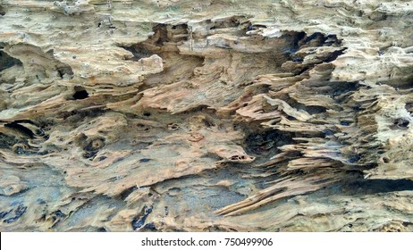 beautiful wooden texture at beach