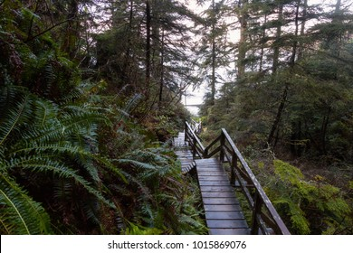 Beautiful wooden trail through the woods going down to the beach during a vibrant winter morning. Taken in Ucluelet, Vancouver Island, BC, Canada.