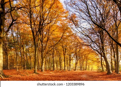 Beautiful woodland in autum fall colors. English forest with orange and falling leaves. Path through ancient forest wood in England