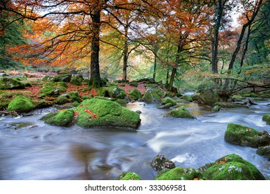 Beautiful woodland in Autumn colour at Dewerstone on Dartmoor National Park in Devon