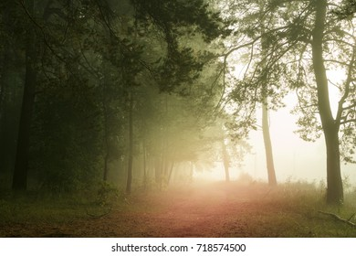 Beautiful woods in fog, sunrise in forest after rain. Country road in beautiful foggy forest.