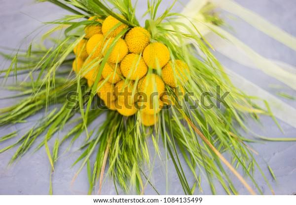 Beautiful Yellow Billy Balls Craspedia Flowers Stock Image
