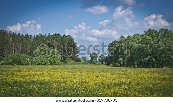 Beautiful yellow buttercups field against the blue sky