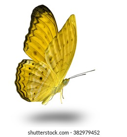 Beautiful Yellow butterfly lower wing profile flying up
