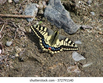 The beautiful yellow butterfly sits on the sand