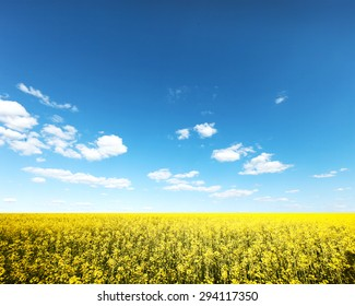Beautiful yellow field with blue sky