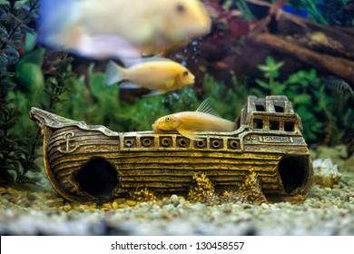 Fish Tank Decorations Images Stock Photos Vectors Shutterstock