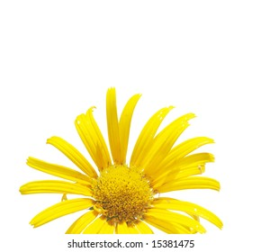 beautiful yellow flower against white background. useful design element.