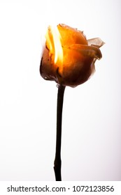 A beautiful yellow flower burns in the fire