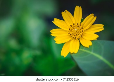 Beautiful yellow flower close-up in garden. concept of nature background and copy space design.