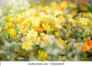 Beautiful Yellow Flower Field with Warm Light