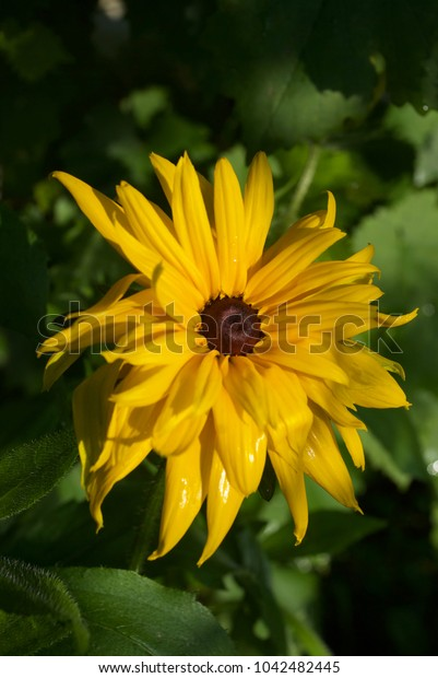 beautiful yellow flower in the garden