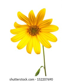 beautiful yellow flower isolated on white background