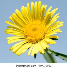 beautiful yellow flower nature