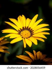 Beautiful yellow flower on dark background, selective focus photo of yellow flower