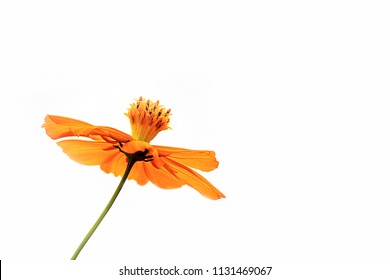 a beautiful yellow flower on white background