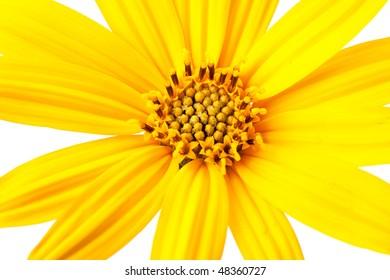 Beautiful yellow flower petals closeup.