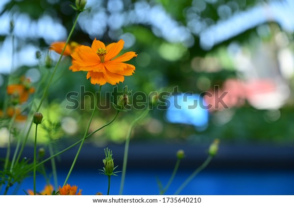 Beautiful yellow flower shallow depth of field shot with blurry bokeh background