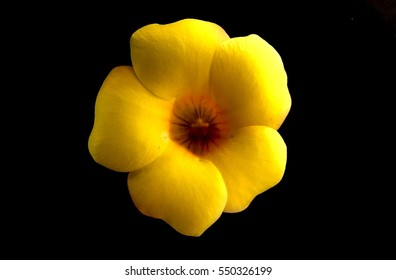 Beautiful Yellow flowers in black background