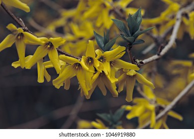 Beautiful yellow flowers blooming on a branch.
