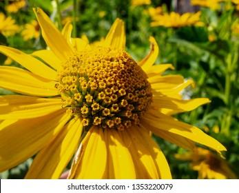 beautiful yellow flowers, close up