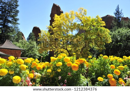 Beautiful Yellow Flowers Colorado Springs Stock Photo Edit Now